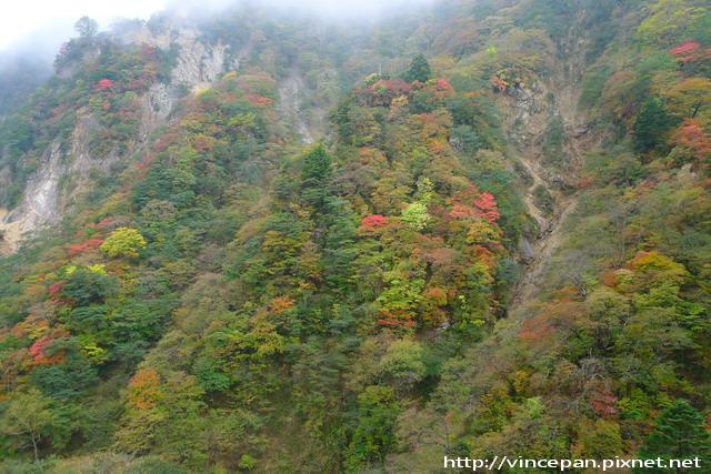 華嚴瀑布旁紅葉