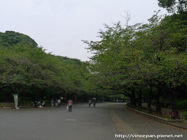 上野恩賜公園 櫻花大道