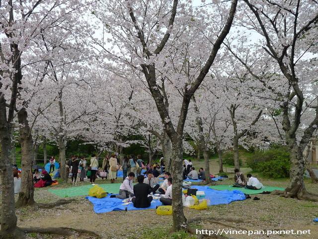 西公園  賞櫻人群