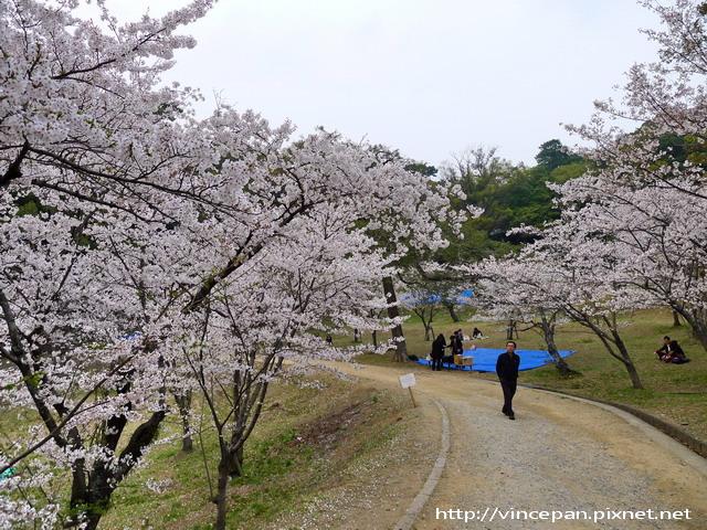 西公園 坡道櫻花