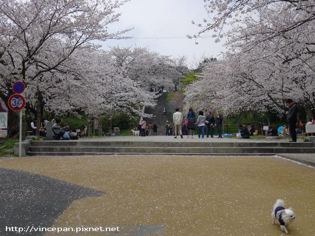 西公園  前櫻花
