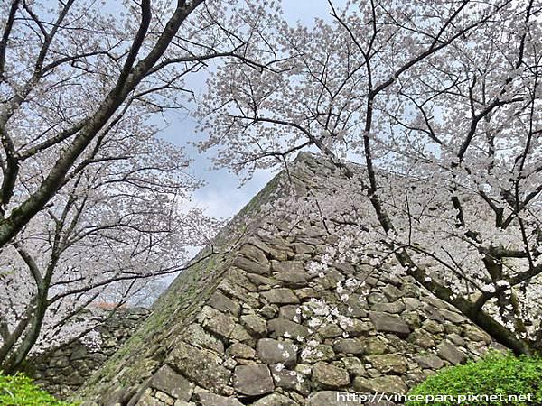 福岡城跡 天守台 櫻花