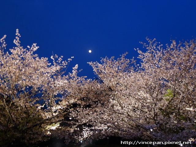 多聞櫓 夜櫻 月亮