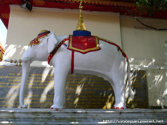 素帖寺 白象
