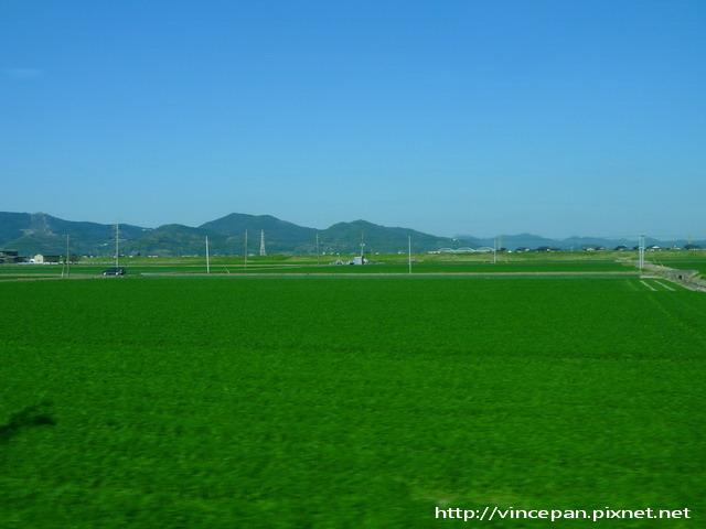佐賀縣的稻田