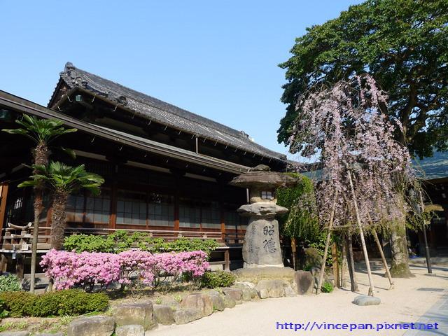 櫛田神社櫻花1