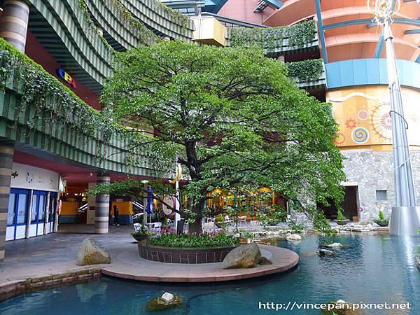 運河畔的樹木
