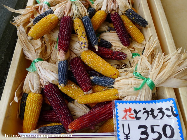 色彩繽紛的玉米