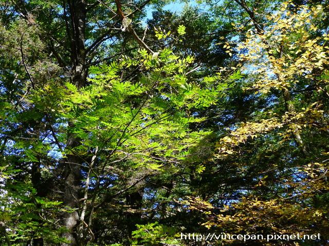樹林 光影