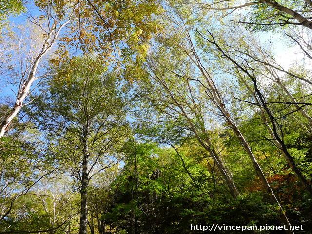 往明神 步道森林