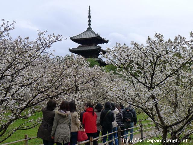 仁和寺  御室櫻 塔