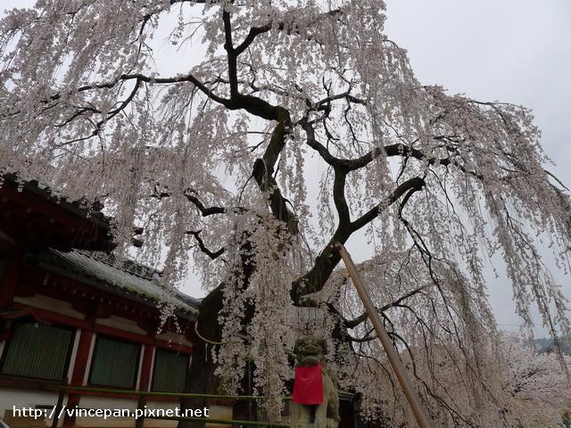 冰室神社 狛犬 2