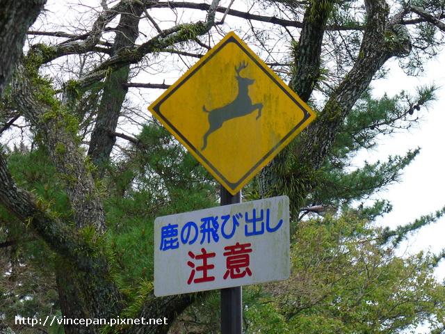 奈良 鹿 交通號誌