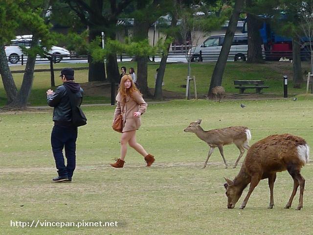 奈良 鹿追人