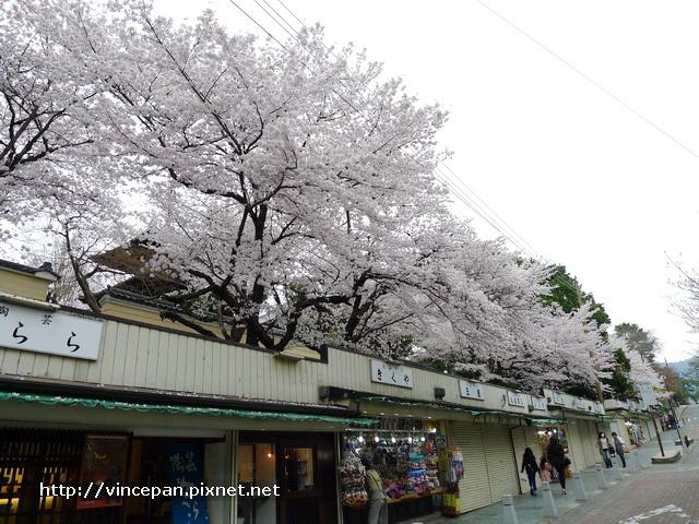 奈良商店上方櫻花