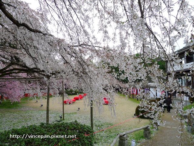 憲深林苑 櫻花2