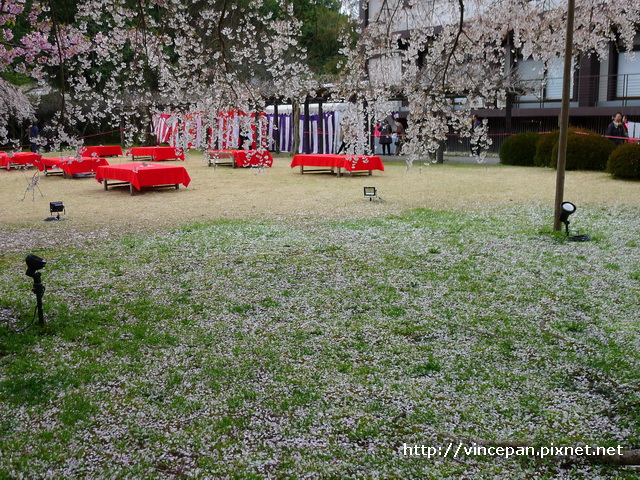 憲深林苑 櫻花花瓣