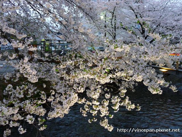 櫻花 河上2