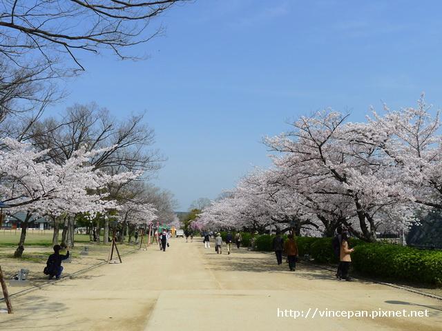 西之丸庭園入口 櫻花
