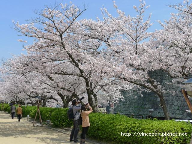 西之丸庭園入口 櫻花 人