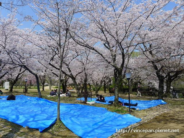 櫻花 野餐2
