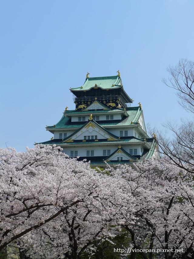 天守閣櫻花7
