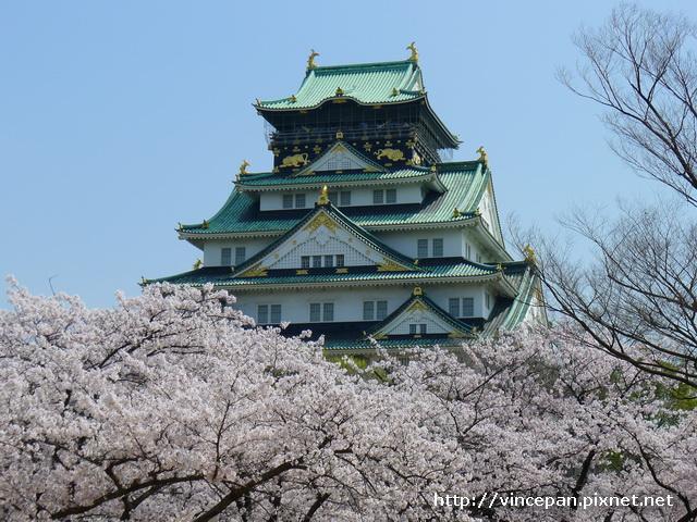 天守閣櫻花8