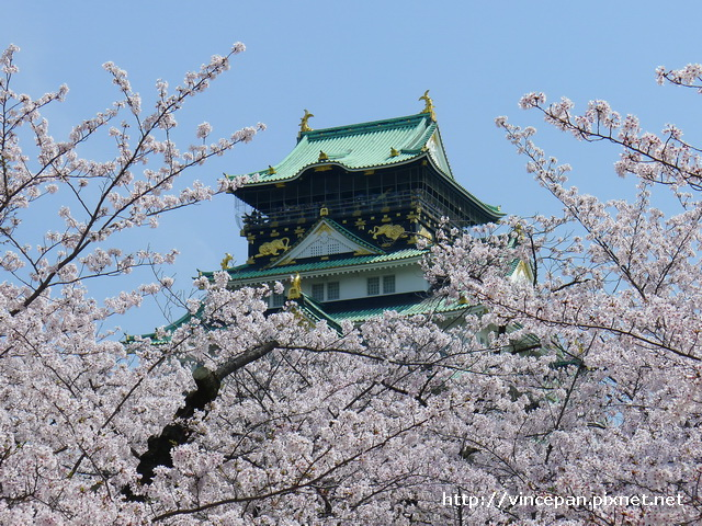 天守閣櫻花11