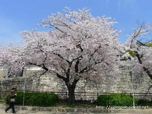 櫻門 前櫻花