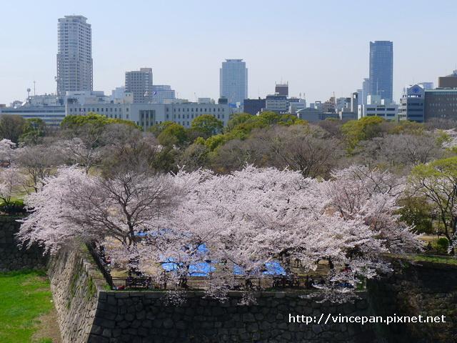 西之丸庭園 櫻花