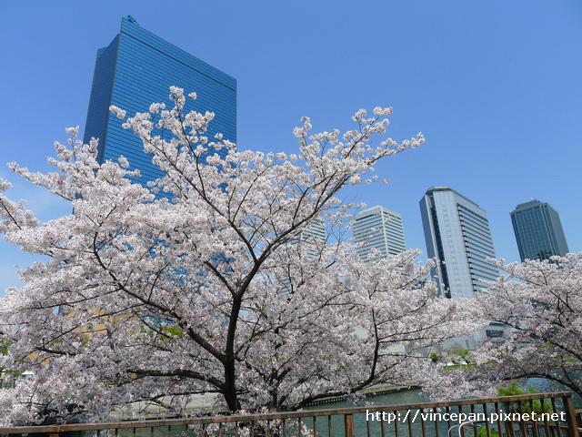 櫻花 大樓