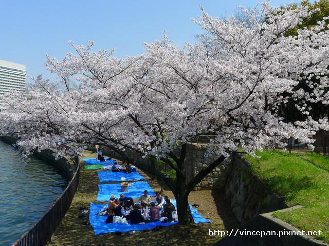 櫻花下 野餐