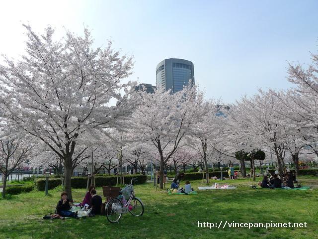 櫻花下 野餐2