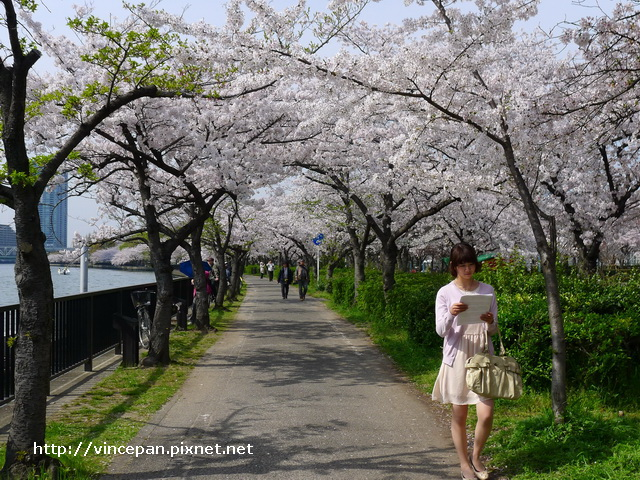 河岸櫻花步道  女生
