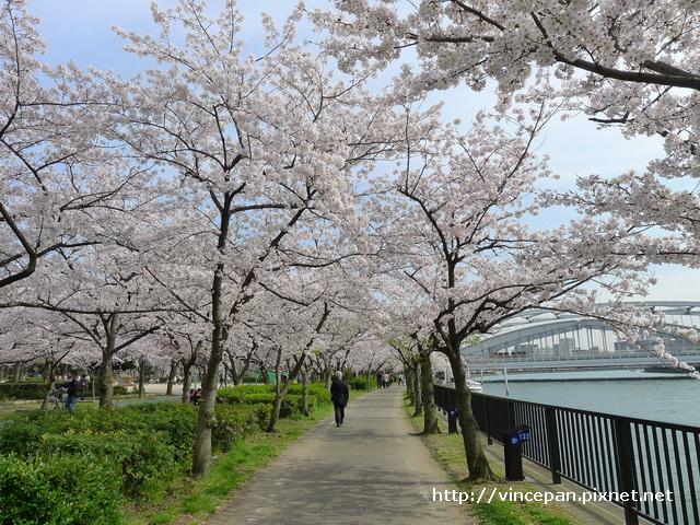 河岸櫻花步道