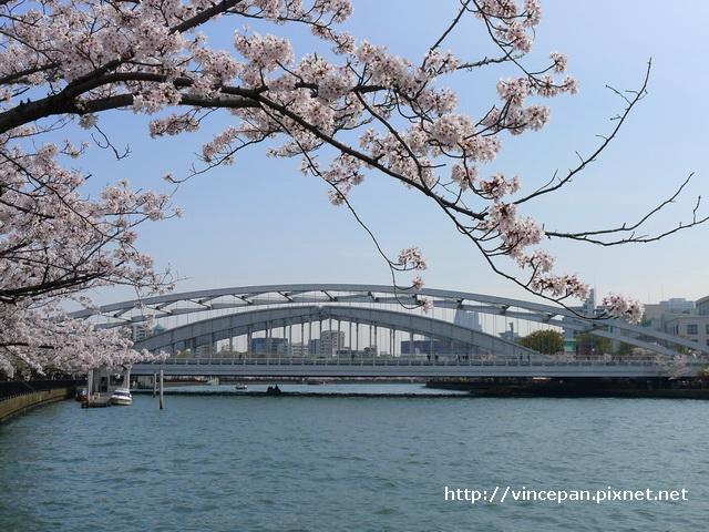 櫻花與鐵橋1