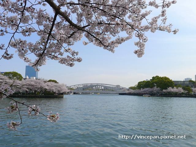 櫻花與遠方鐵橋