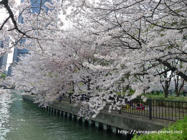 櫻花 河岸轉角