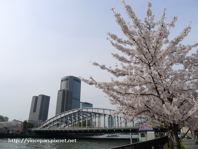 櫻花與鐵橋2