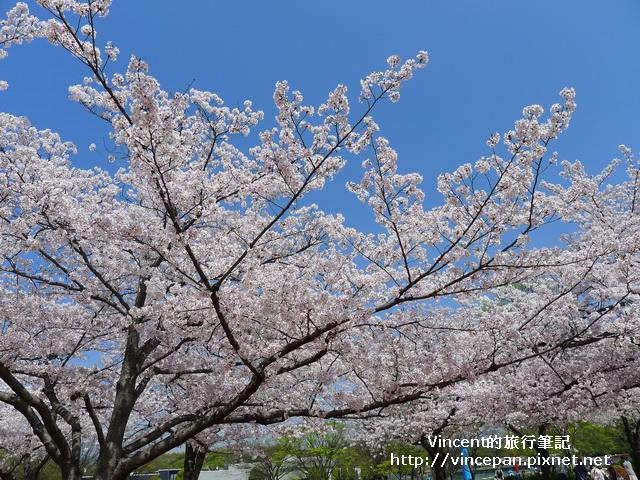 櫻花 天空