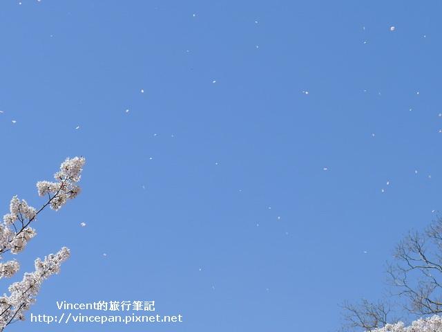 櫻花吹雪2