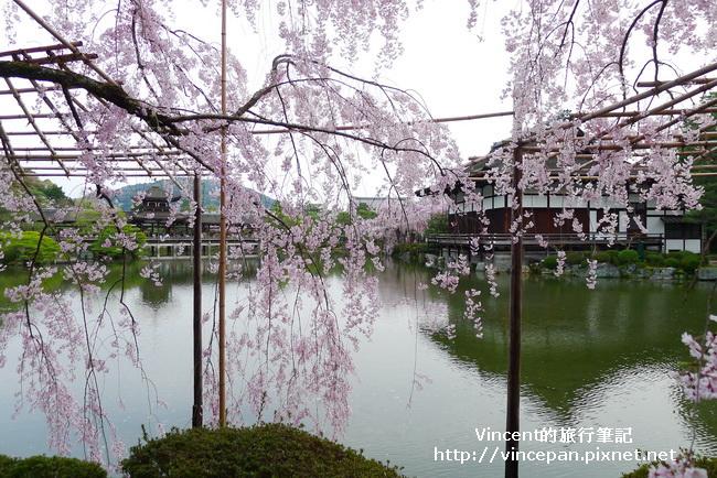 東神苑 櫻花