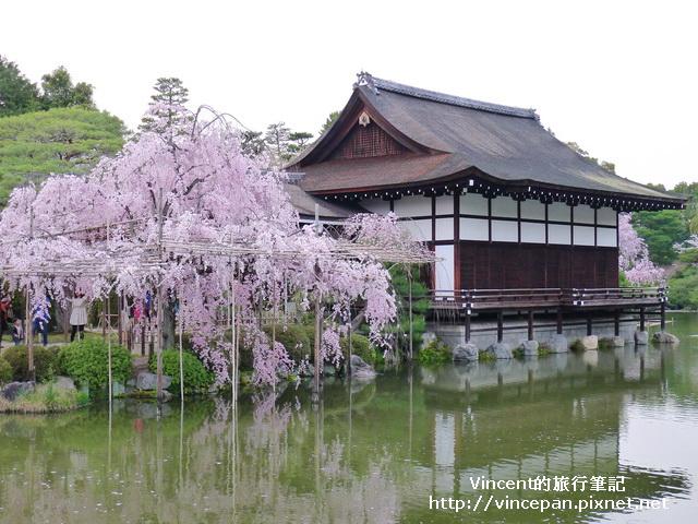 尚美館櫻花