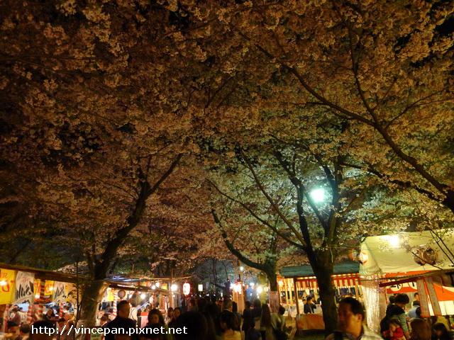 平野神社 夜櫻