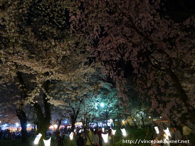 平野神社 夜櫻3