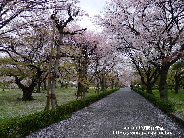 清流園旁櫻花