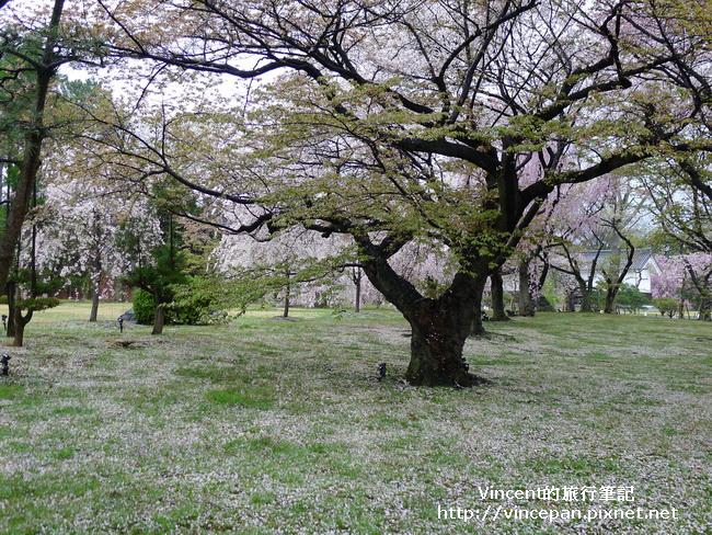 清流園櫻花地毯1
