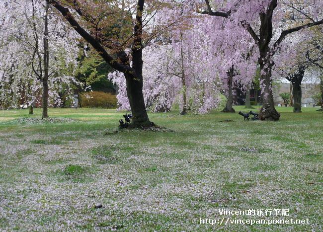 清流園櫻花地毯2