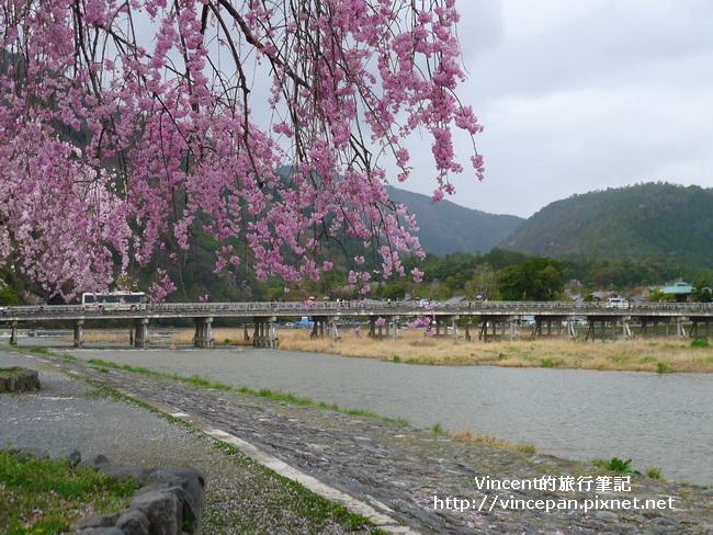渡月橋  櫻花2