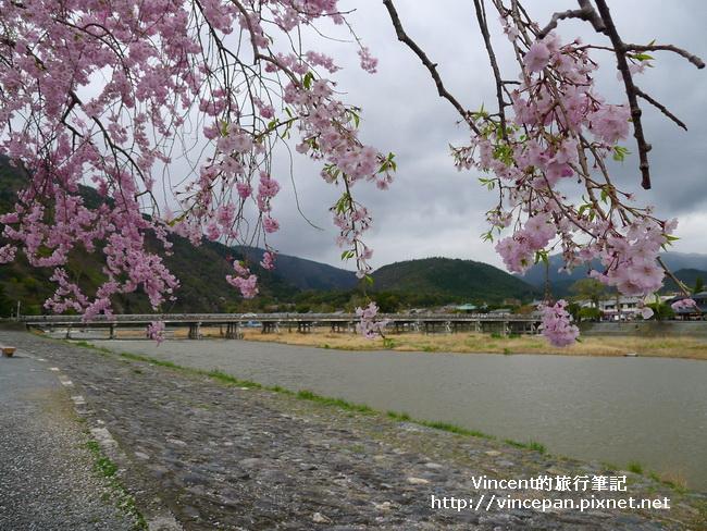 渡月橋  櫻花1